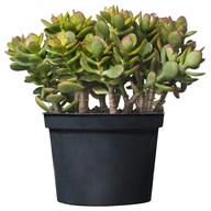 plant container shelf pulls